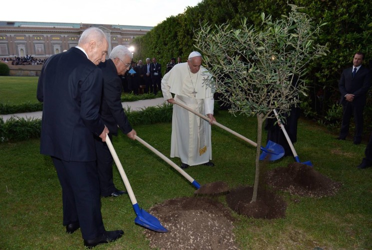 Pope and olive tree