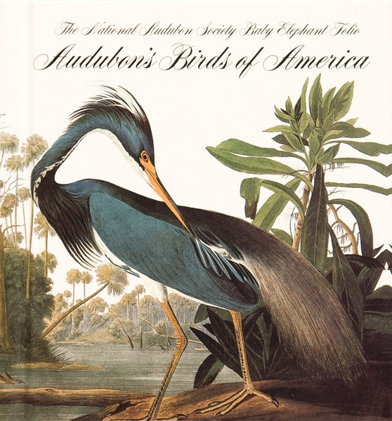 John James Audubon - bird