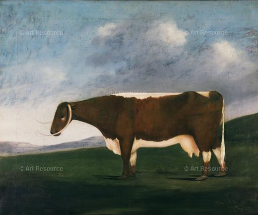 Anonymous. Beautiful Longhorn, Prize Cow (19th C.). Oxford Agricultural College, UK.