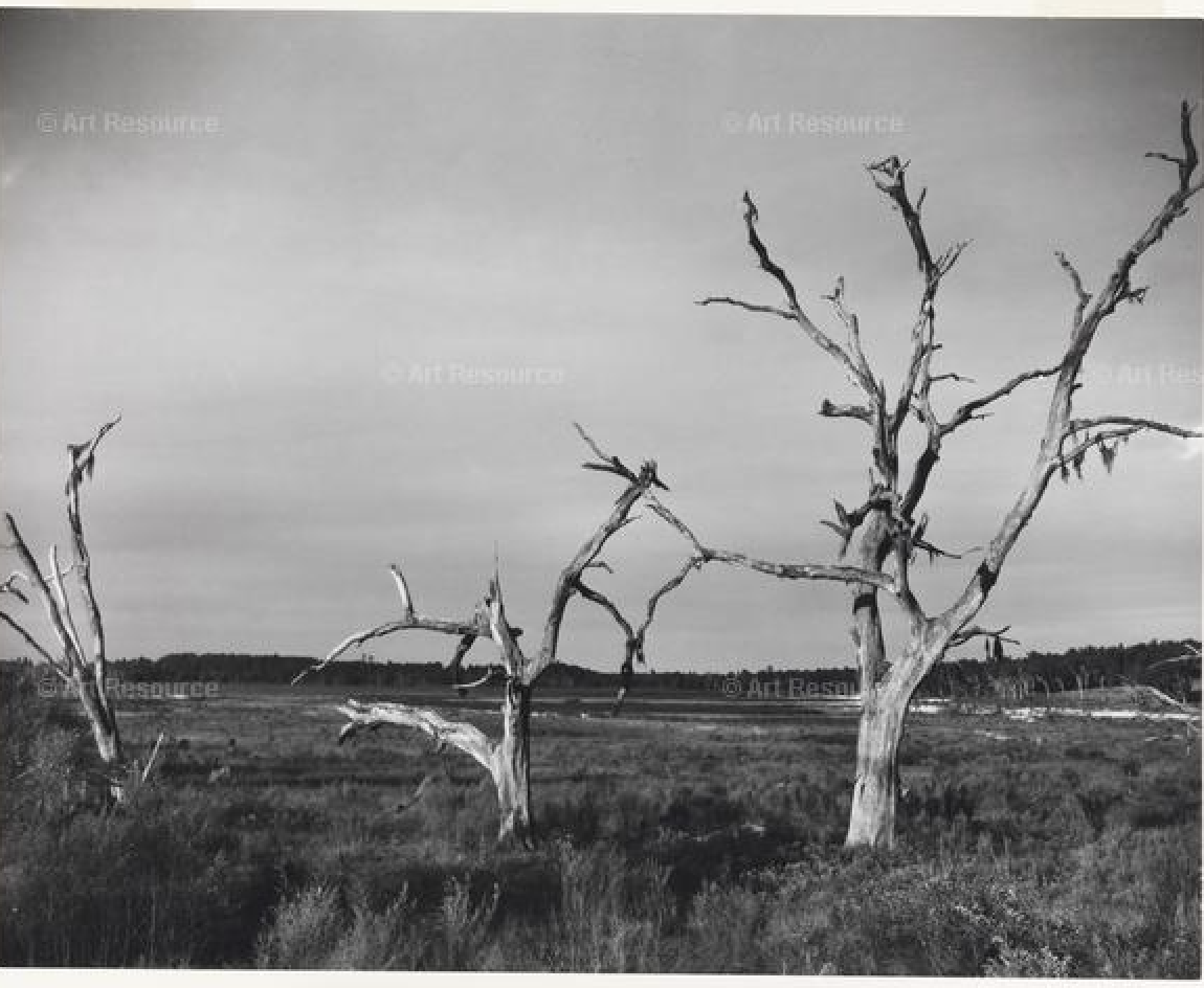 photo of dead trees